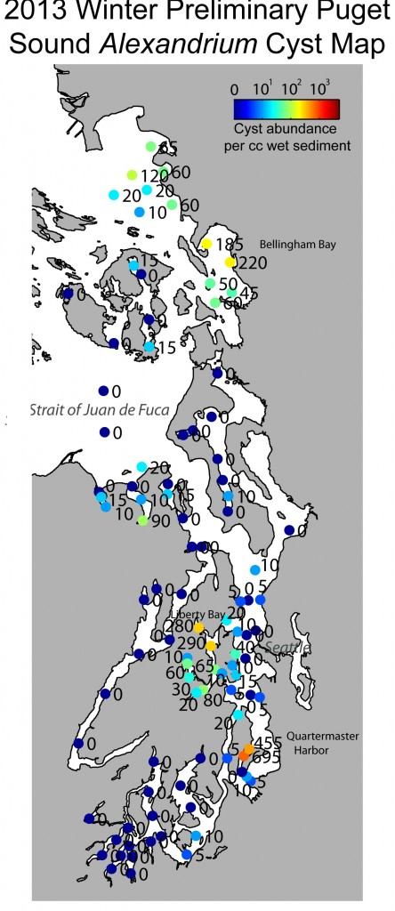2013 Puget Sound cyst abundance map