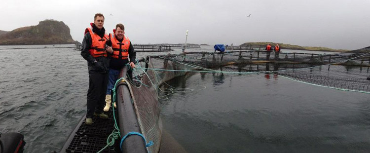 NCCOS researchers visit a commercial Atlantic salmon (Salmo salar)
