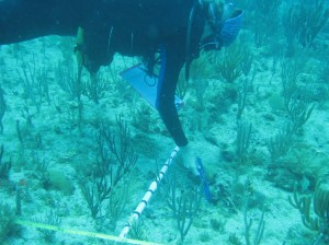 image of NCCOS diver leading underwater training on coral measurements