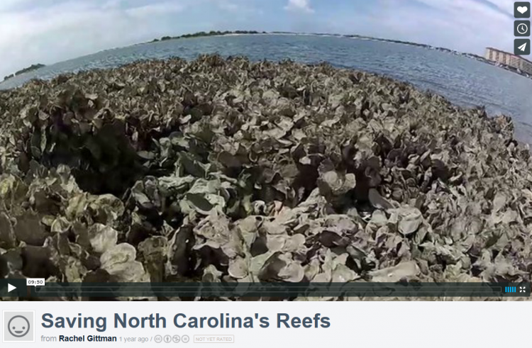 """Saving North Carolina's Reefs"" film short from the Beneath the Waves Film Festival."