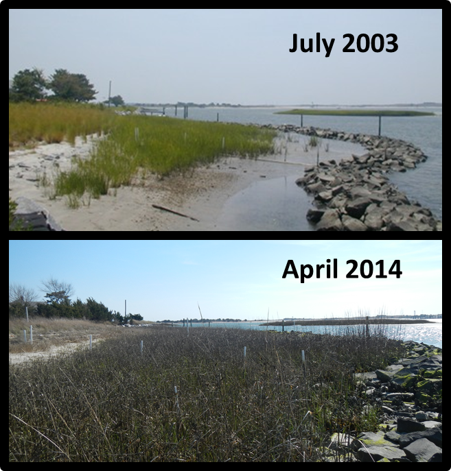Changes in elevation and vegetation following the 2002 stone sill installation and marsh restoration next to NOAA's Beaufort Laboratory on Pivers Island in North Carolina.