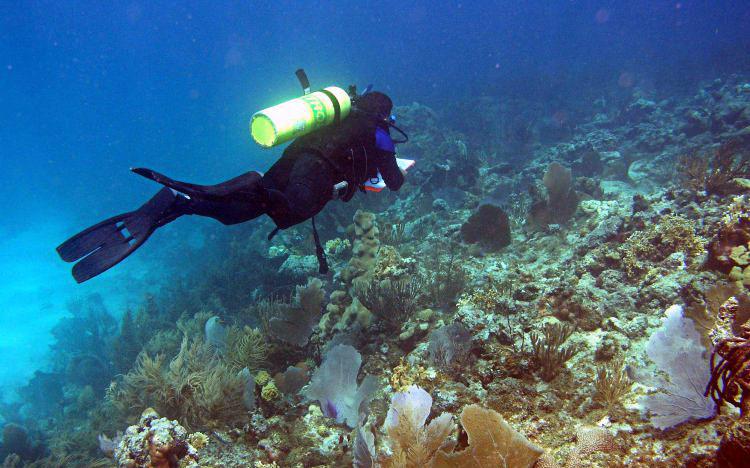 An NCCOS diver surveys a Caribbean coral reef. Photo credit: NOAA.