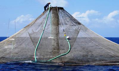 ocean net pen during cleaning