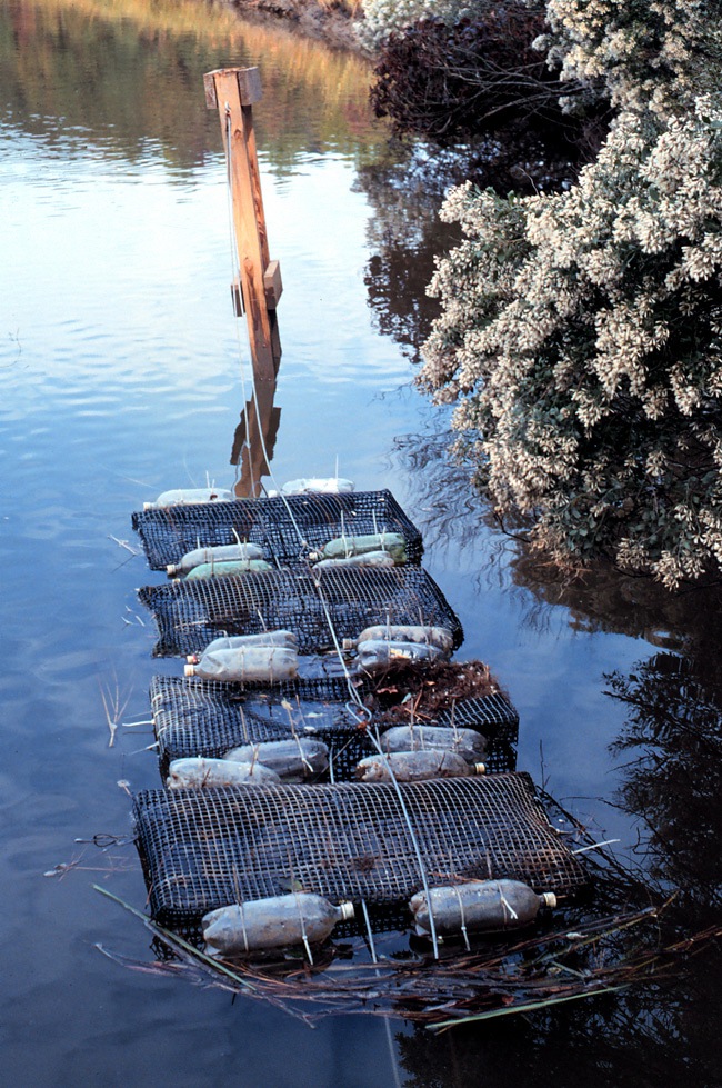 Oyster floats growing oysters in Taskinas Creek, Chesapeake Bay Virginia National Estuarine Research Reserve. Credit: NOAA