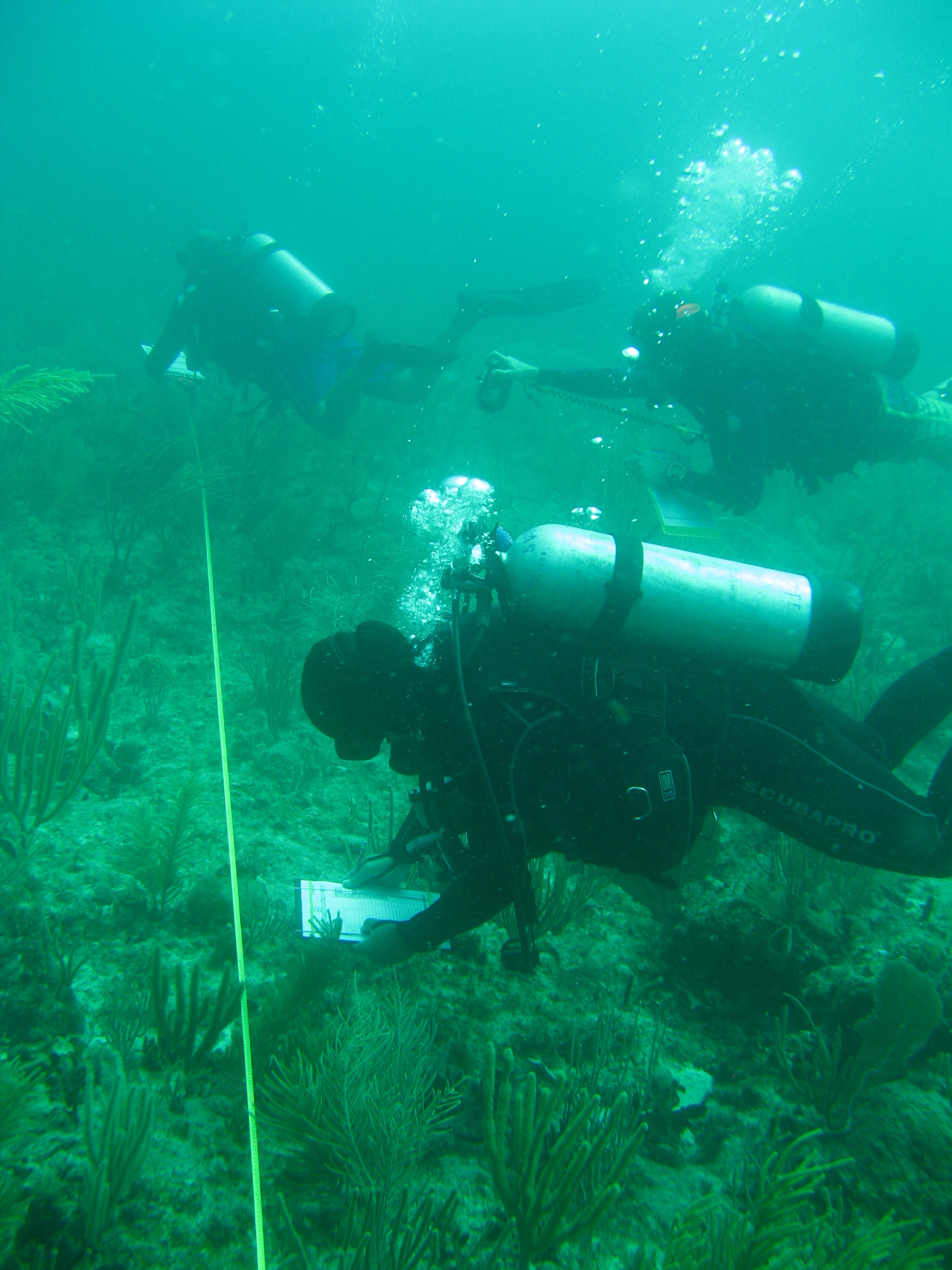 Divers Surveying The Reefs At Flower Garden Banks.