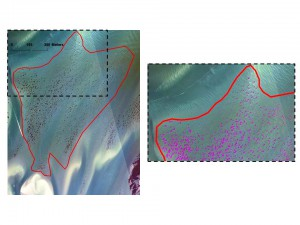A manually-delineated seagrass polygon (red) encompasses small seagrass patches with extensive unvegetated areas between discrete patches (left). The close-up (right) reveals extensive unvegetated areas between discrete patches and the ability of linear spectral unmixing to classify individual seagrass patches (magenta). Credit: NOAA.