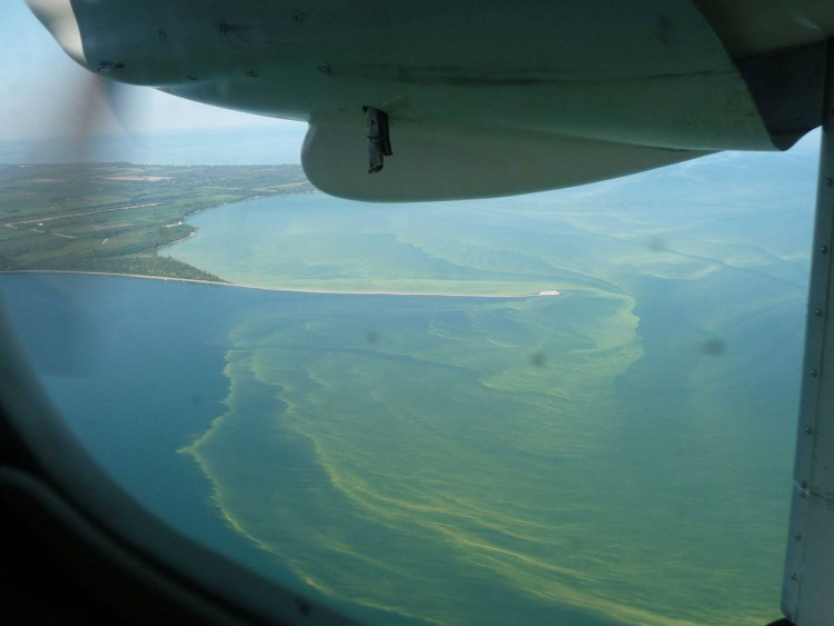 Lake Erie cyanobacteria bloom, 2011