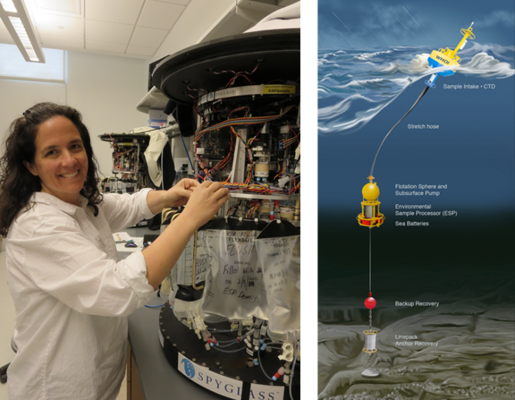 Left, NCCOS scientist, Tina Mikulski, calibrates an Environmental Sample Processor at LOSOS. Right, diagram of ESP as deployed in the Gulf of Maine.  (Credit Woods Hole Oceanographic Institution)