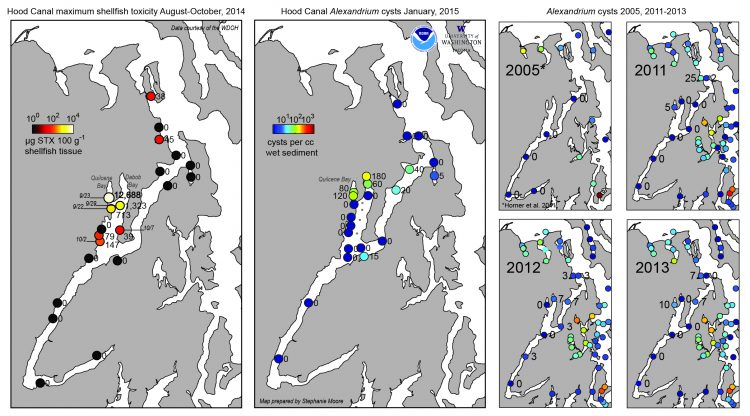 Left Panel: Hood Canal maximum shellfish toxicity values at shellfish monitoring sites with the dates that the maximum values were observed. Right Panels: Hood Canal Winter Alexandrium cyst maps for 2005, 2011, 2012, 2013, and 2015 from surveys conducted as part of NCCOS ECOHAB funding. The series of gray markers along Dabob Bay are sites the project had planned to sample but were unable to access because of Navy equipment that was in the water. (Credit Stephanie Moore, NOAA Fisheries)