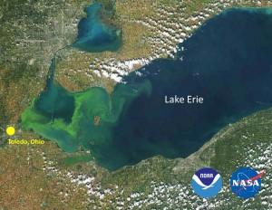 MODIS satellite image of 2014 harmful algal bloom in Lake Erie