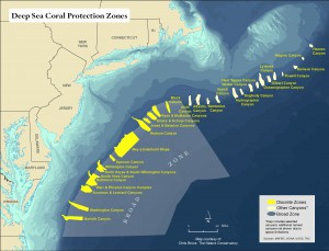 A map depicting the 15 discrete protected zones (in yellow) agreed upon by the MAFMC. Credit: The Nature Conservancy
