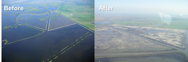Restoring coastal Louisiana requires balancing wetland restoration, flood control, sediment delivery, nutrient management, hypoxia mitigation, and the health of coastal Fisheries. For example, the Mississippi River Sediment Delivery System-Bayou Dupont project, before (top) and after (bottom). (Credit: USGS National Wetlands Research Center, Lafayette, Louisiana)