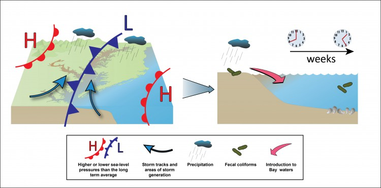 Patterns of sea-level pressure and precipitation corresponded to years with high fecal bacterial levels in shellfish harvest waters, with some delays in timing between rainfall and elevated bacterial levels. Credit: Integration and Application Network, University of Maryland Center for Environmental Science (some symbols)