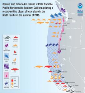 West Coast Bloom Impacts, 2015. Credit V. Trainer (NOAA NMFS) and R. Kudela (UC Santa Cruz), unpublished data