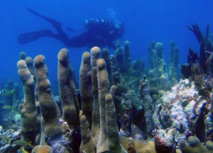 A diver explores coral in the Florida Keys