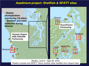MERHAB project sampling area in Washington State (enlarged region left, Puget Sound right) and sampling sites (red boxes). Sampling sites use the solid phase adsorption toxin tracking (SPATT) methodology of resin bags that accumulate the toxin. Credit SoundToxins, Seattle WA