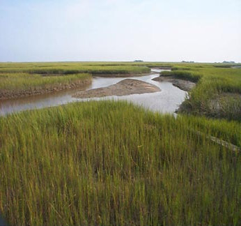 Tidal salt marshes like this one in South Carolina may not be able to keep pace with long-term rising sea levels according to a new NCCOS study. Credit J. Morris, University of South Carolina