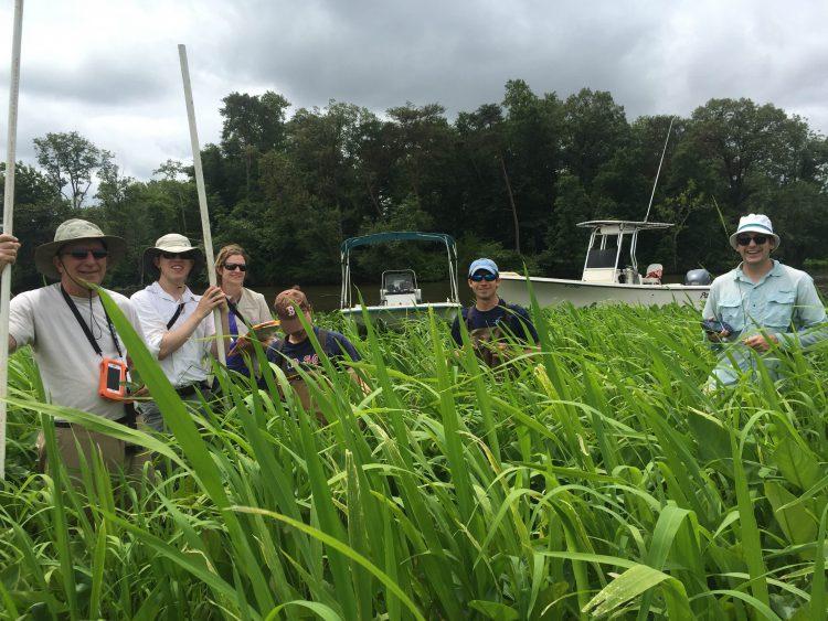 From left: Dr. John Schalles, Chris Pachulski, Jana Pearce, Lauren Winter, Jason Spires, and John O'Donnell conduct vegetation surveys in the Choptank.