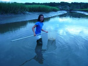 Catherine Nguyen collects grass shrimp in a local tidal creek.