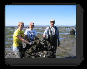 Oyster harvesting in Willapa Bay. Credit: Washington Dept. of Ecology