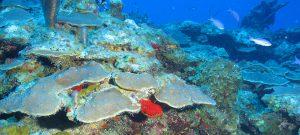 A Caribbean coral reef. Credit: NOAA.