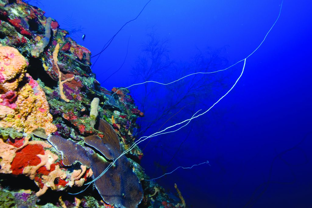 Image of mesophotic coral ecosystem off La Parguera, Puerto Rico, at a depth of 45 m (147 ft).