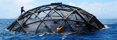 Marine Cage Culture and the Environment