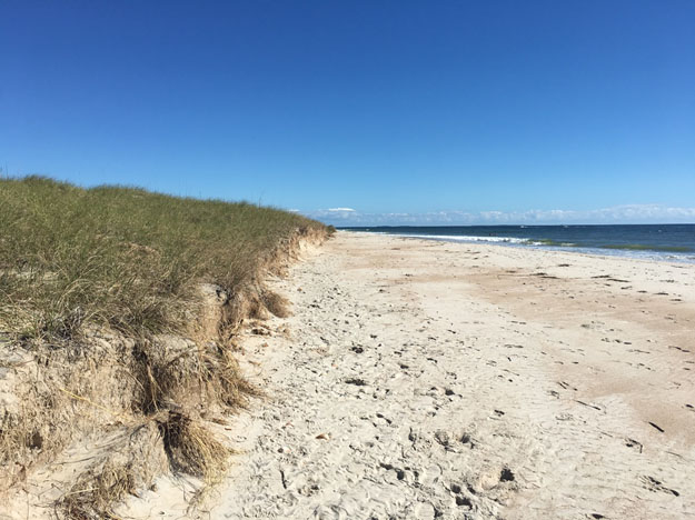 Dune erosion, or scarping, caused by Hurricane Matthew. along Shackleford Banks, North Carolina.