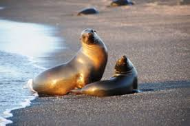 Mobile Rapid Pathogen Test for Leptospira in California Sea Lions Validated