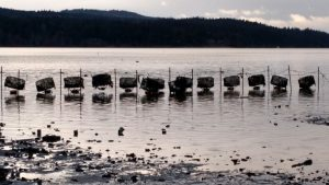 NCCOS Helps Shellfish Growers Stay Informed on HAB Mitigation Tools