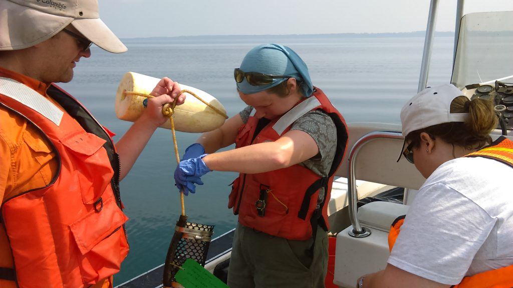 USGS scientists retrieve mussels from a monitoring station in Lake Erie.