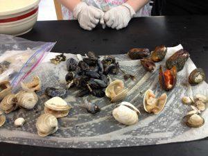NCCOS and Alaska Partners Provide Harmful Algal Bloom Awareness via AHAB Network