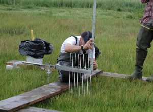 image of scientist measuring marsh surface elevation