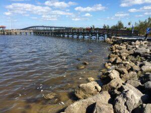Living Shorelines in Chesapeake Bay Improve Benthic Communities