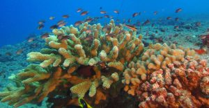 NCCOS Assessment Supports Effective Management of Hawaii's Nearshore Waters