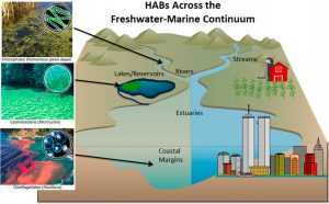 Mitigation Strategies for Harmful Algal Blooms Span from Headwater Streams to Coastal Waters