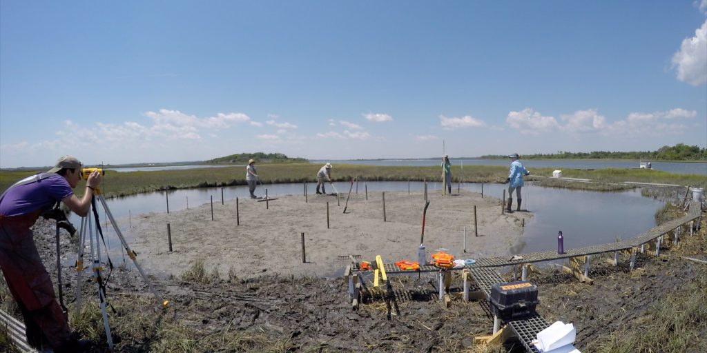 The researchers prepare the former pond for marsh grass planting.