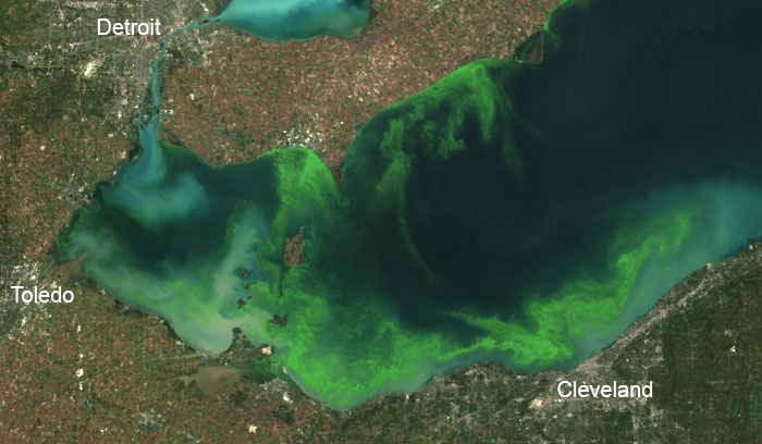 Satellite image of 2011 algal bloom in western Lake Erie.
