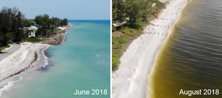 Casey-Key-FL-before-and-during-2018-red-tide