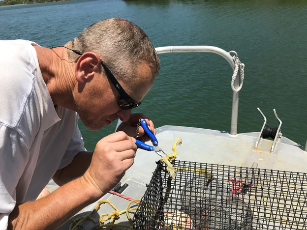 NCCOS scientist Matt Kendall prepares a fish trap for deployment in Salt River Bay, St. Croix, USVI.
