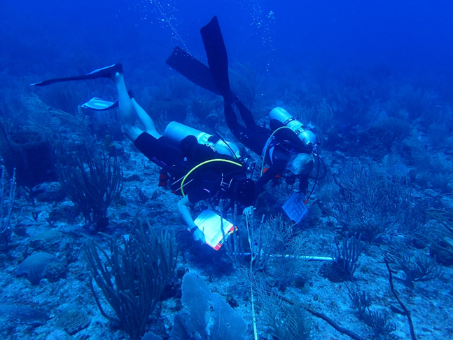 Divers collect benthic data on St. John, USVI, reef during NCRMP 2017 mission.