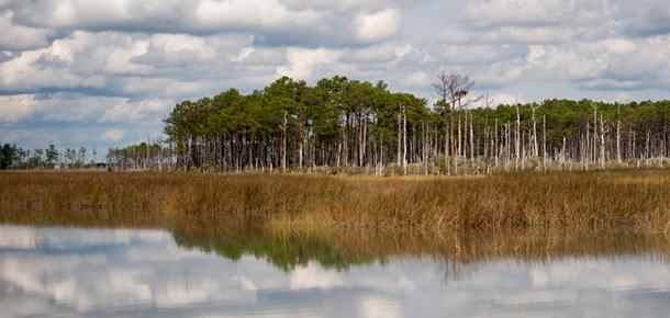 Chesapeake Bay marsh.