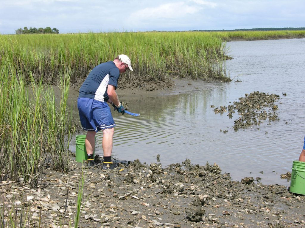 Photo of oyster collection in a South Carolina tidal marsh.