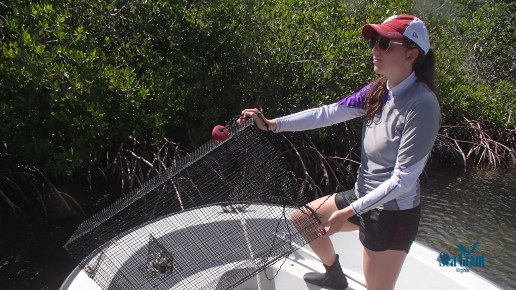 photo of Bethany Williams collecting fish in St. Croix, USVI, for one of her spatial ecology projects.
