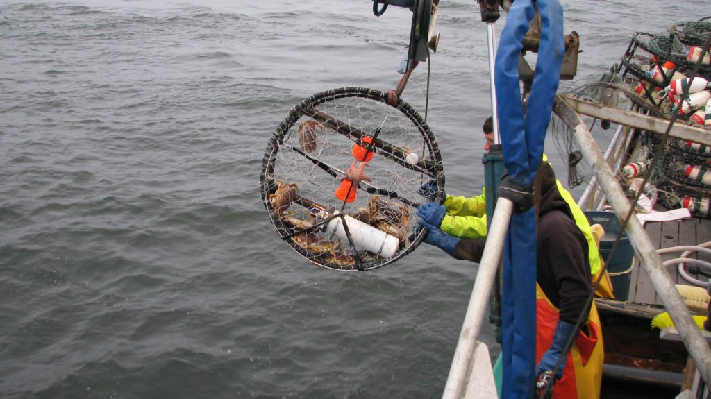 photo of first-generation dissolved oxygen sensor attached to a commercial crab pot.