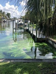 Exploring Airborne Health Risks from Cyanobacteria Blooms in Florida