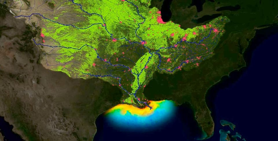 The Mississippi River watershed drains 1.245 million square miles, including all or parts of 31 U.S. states and two Canadian provinces. This map generally illustrates how runoff from farms (green areas) and cities (red areas) drains into the Mississippi River, delivering nutrients into the Gulf of Mexico and fueling the annual hypoxic zone.