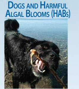 Protecting Your Dog from Harmful Algal Blooms: Information and Resources