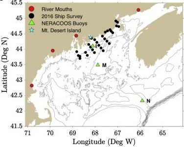 Why are Toxic Pseudo-nitzschia Blooms Increasing in the Gulf of Maine?