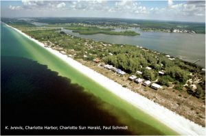 NCCOS and GCOOS Soliciting Proposals for Assessing the Social and Economic Impacts of Florida Red Tide
